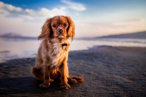 pielęgnacja psów gliwice